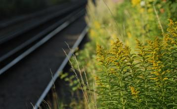 Railway tracks and grass